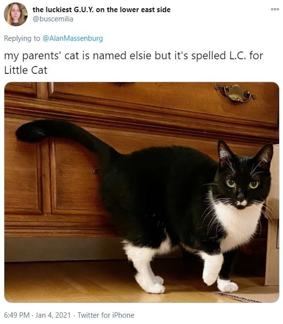 Wood - the luckiest G.U.Y. on the lower east side 000 @buscemilia Replying to @AlanMassenburg my parents' cat is named elsie but it's spelled L.C. for Little Cat 6:49 PM Jan 4, 2021 - Twitter for iPhone