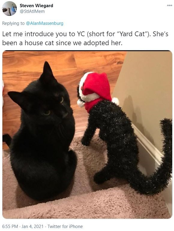 """Vertebrate - Steven Wiegard @StIAtIMem 000 Replying to @AlanMassenburg Let me introduce you to YC (short for """"Yard Cat""""). She's been a house cat since we adopted her. 6:55 PM - Jan 4, 2021 - Twitter for iPhone"""