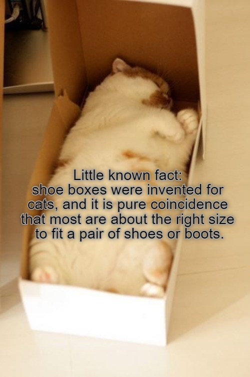 Little known fact: Shoe boxes were invented for cats, and it is pure coincidence that most are about the right size to fit a pair of shoes or boots. | cute chonky cat sleeping in a box