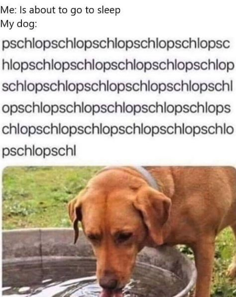 Me: Is about to go to sleep My dog: pschlopschlopschlopschlopschlopsc hlopschlopschlopschlopschlopschlop schlopschlopschlopschlopschlopschl opschlopschlopschlopschlopschlops chlopschlopschlopschlopschlopschlo pschlopschl | dog drinking from a bowl