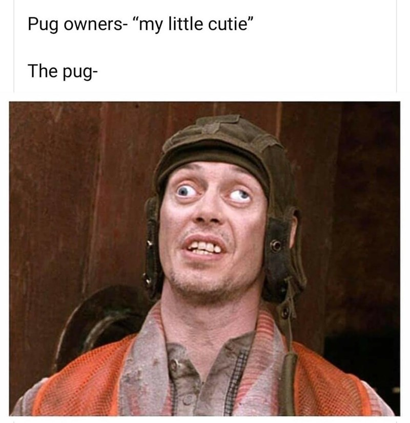 """Chin - Pug owners- """"my little cutie"""" The pug-"""