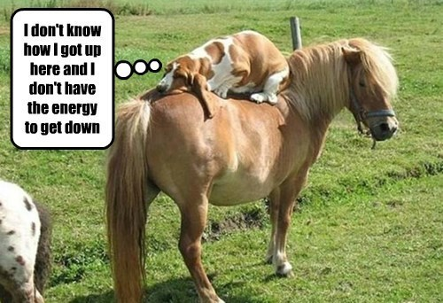 I don't know howl got up here and I don't have the energy to get down | cute dog sleeping on top of a pony's back