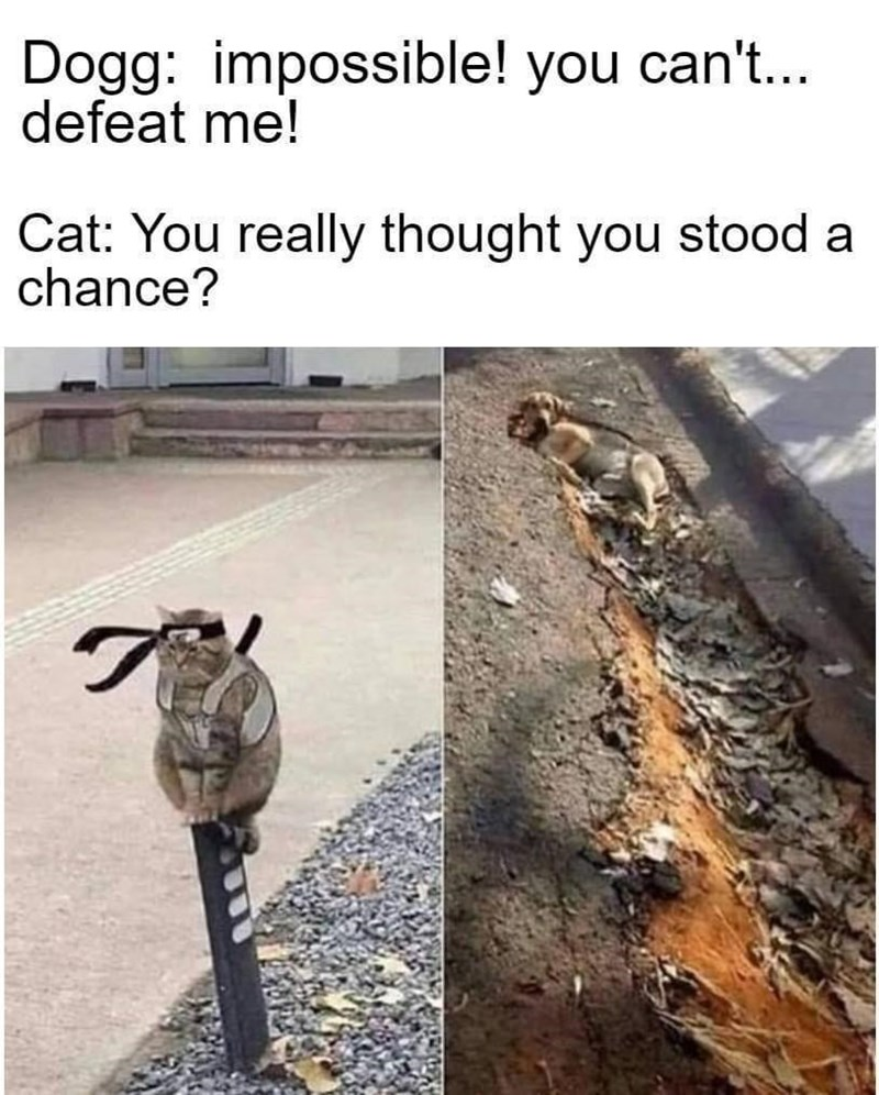 funny, memes, animal memes, dogs, cats | Dogg: impossible! you can't... defeat me! Cat: You really thought you stood a chance? samurai cat standing on a pole and dog lying in a crack in the road