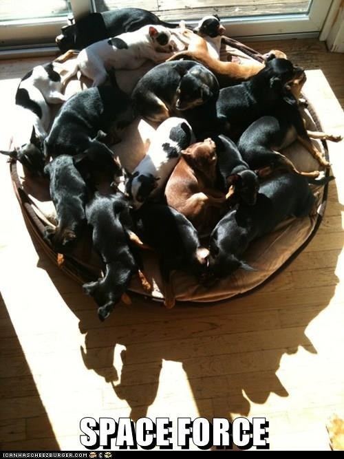 SPACE FORCE cute pic of many dogs sleeping in a pile on a round bed in the sunlight