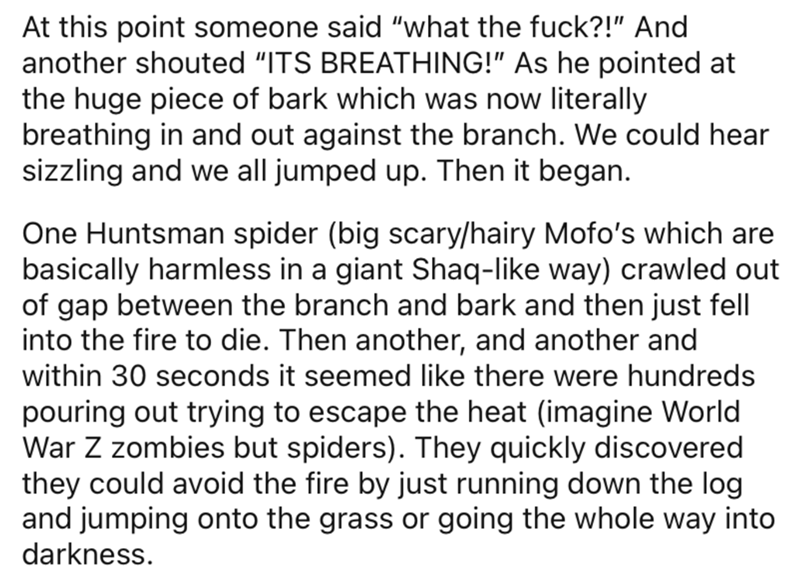 """Text - At this point someone said """"what the fuck?!"""" And another shouted """"ITS BREATHING!"""" As he pointed at the huge piece of bark which was now literally breathing in and out against the branch. We could hear sizzling and we all jumped up. Then it began. One Huntsman spider (big scary/hairy Mofo's which are basically harmless in a giant Shaq-like way) crawled out of gap between the branch and bark and then just fell into the fire to die. Then another, and another and within 30 seconds it seemed l"""