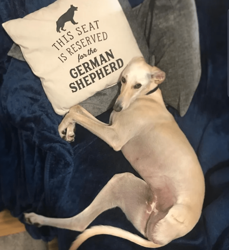 Dog breed - THIS SEAT IS RESERVED for the GERMAN SHEPHERD