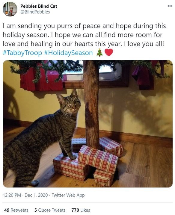 Small to medium-sized cats - Pebbles Blind Cat 000 @BlindPebbles I am sending you purrs of peace and hope during this holiday season. I hope we can all find more room for love and healing in our hearts this year. I love you all! #TabbyTroop #HolidaySeason 12:20 PM · Dec 1, 2020 · Twitter Web App 49 Retweets 5 Quote Tweets 770 Likes