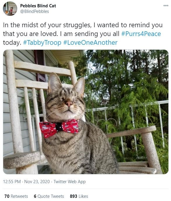 Organism - Pebbles Blind Cat 000 @BlindPebbles In the midst of your struggles, I wanted to remind you that you are loved. I am sending you all #Purrs4Peace today. #TabbyTroop #LoveOneAnother 12:55 PM Nov 23, 2020 Twitter Web App 70 Retweets 6 Quote Tweets 893 Likes