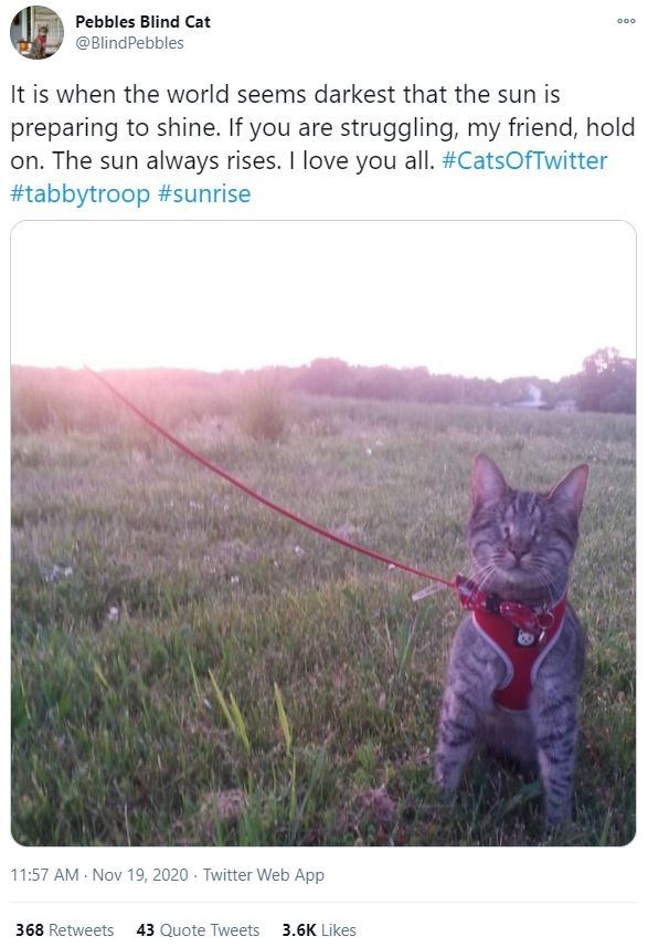 Small to medium-sized cats - Pebbles Blind Cat 000 @BlindPebbles It is when the world seems darkest that the sun is preparing to shine. If you are struggling, my friend, hold on. The sun always rises. I love you all. #CatsOfTwitter #tabbytroop #sunrise 11:57 AM - Nov 19, 2020 · Twitter Web App 368 Retweets 43 Quote Tweets 3.6K Likes