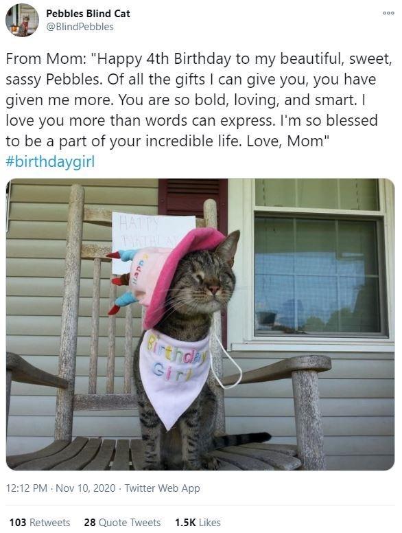 Collar - 000 Pebbles Blind Cat @BlindPebbles From Mom: