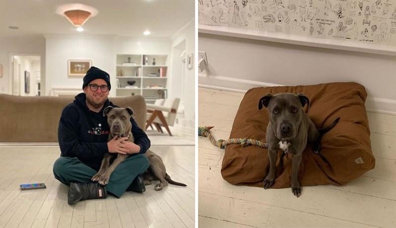 Dog breed - VA T n