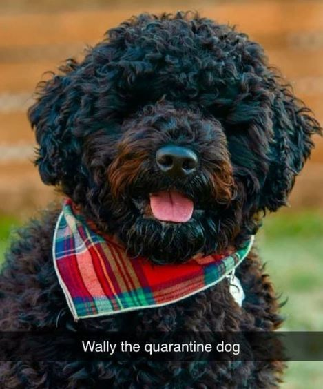 Dog breed - Wally the quarantine dog