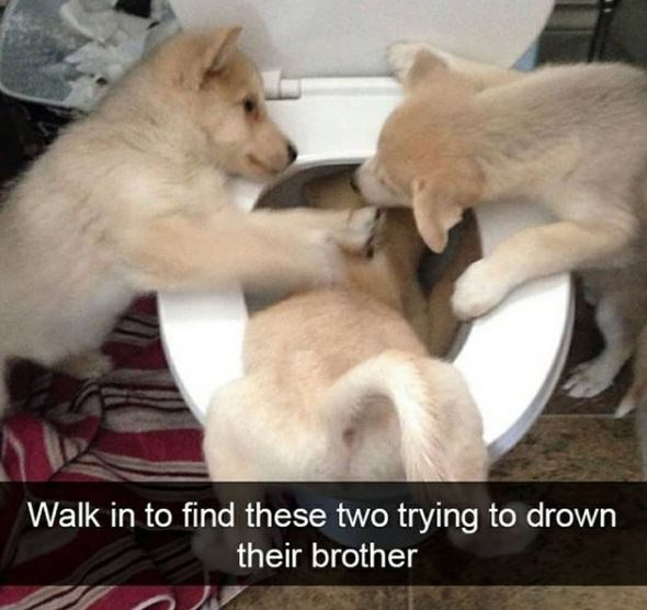 Carnivore - Walk in to find these two trying to drown their brother