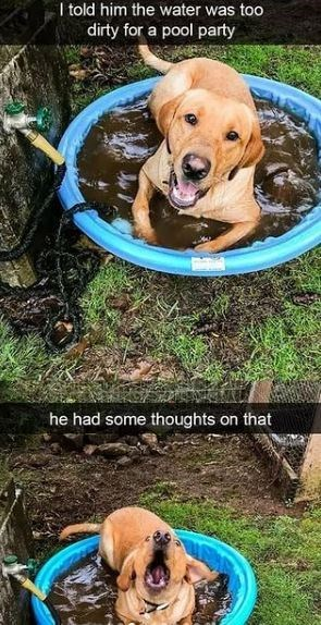 Dog breed - I told him the water was too dirty for a pool party he had some thoughts on that