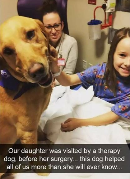 Dog breed - eer Our daughter was visited by a therapy dog, before her surgery... this dog helped all of us more than she will ever know...