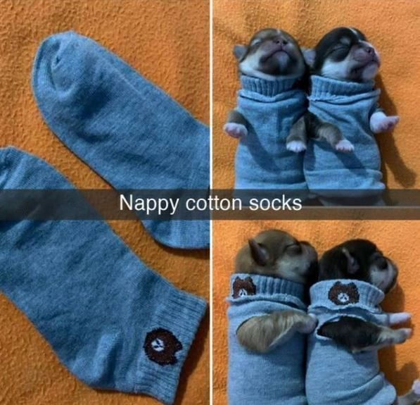 Blue - Nappy cotton socks