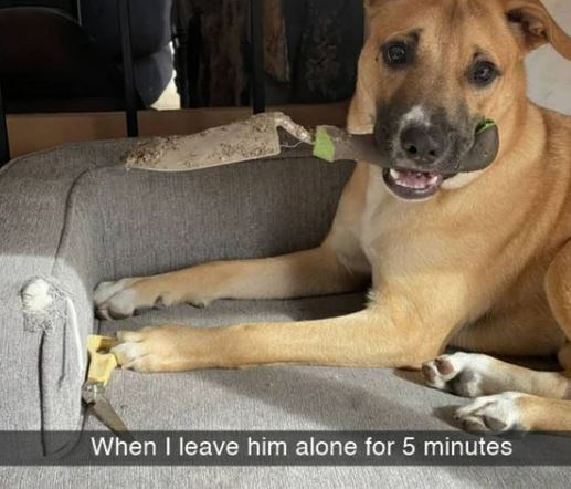 Dog breed - When I leave him alone for 5 minutes