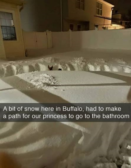 Property - A bit of snow here in Buffalo, had to make a path for our princess to go to the bathroom