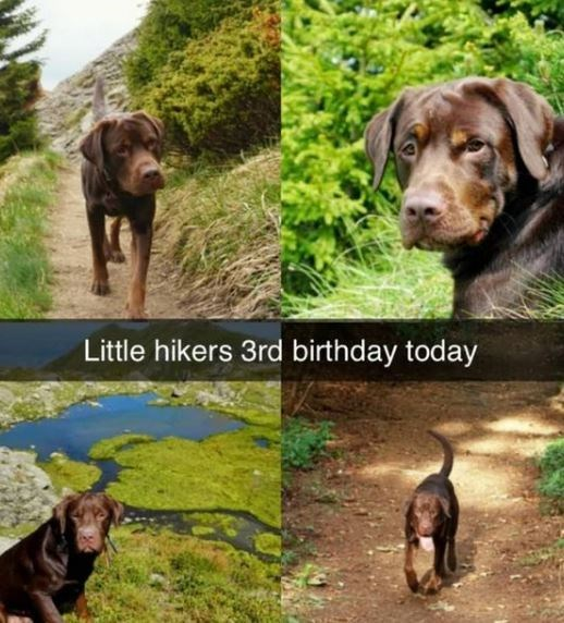 Dog breed - Little hikers 3rd birthday today