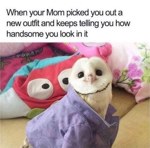 Organism - When your Mom picked you out a new outfit and keeps telling you how handsome you look in it