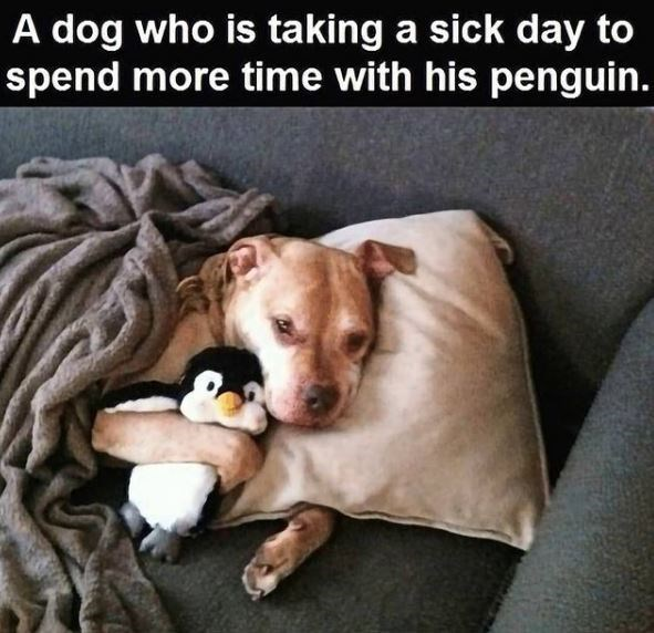 Dog breed - A dog who is taking a sick day to spend more time with his penguin.