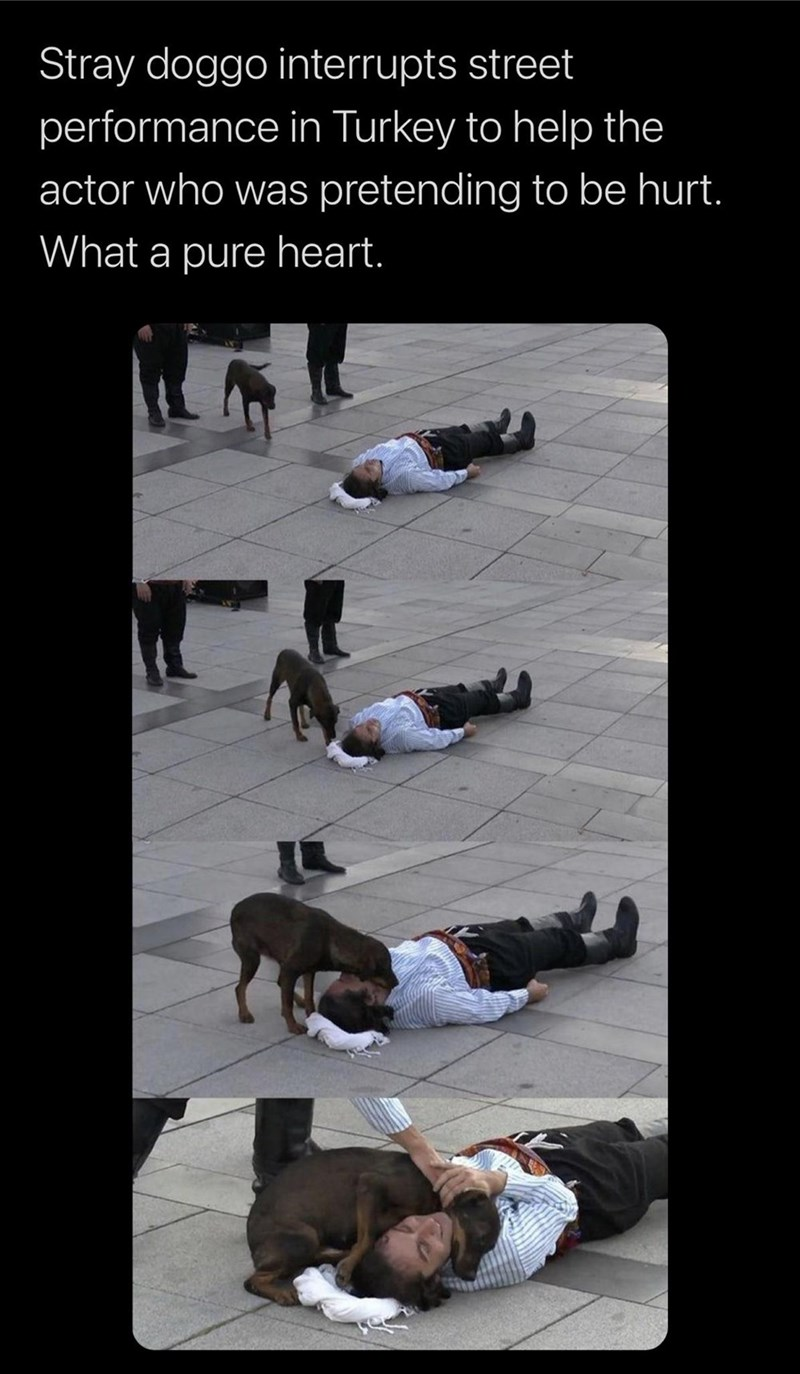 Leg - Stray doggo interrupts street performance in Turkey to help the actor who was pretending to be hurt. What a pure heart.