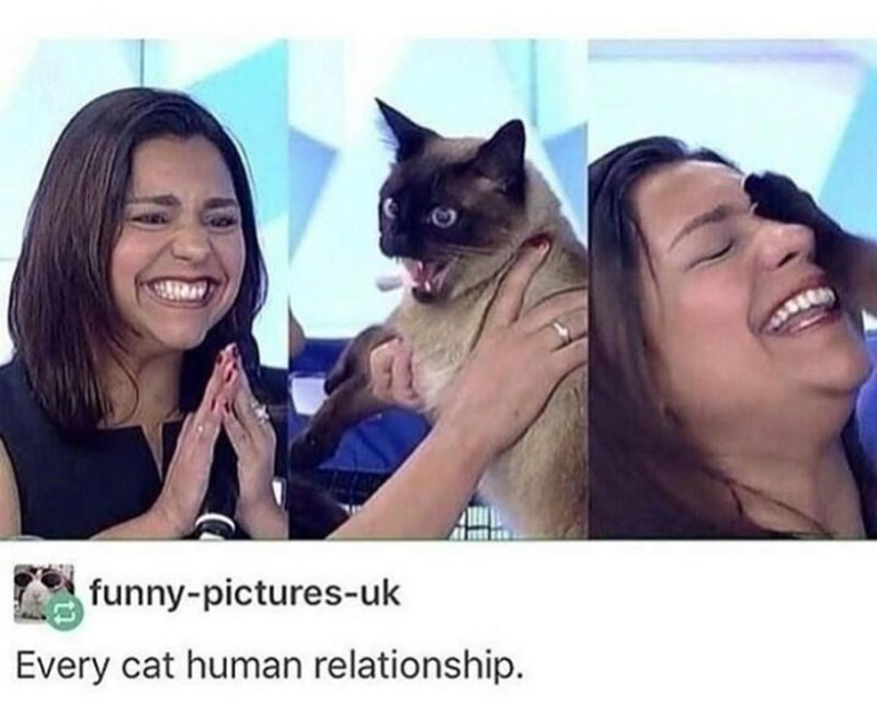 Human - funny-pictures-uk Every cat human relationship.