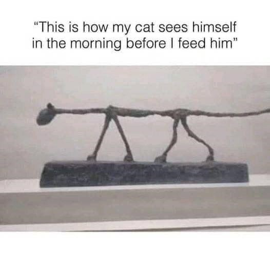 """Font - """"This is how my cat sees himself in the morning before I feed him"""""""