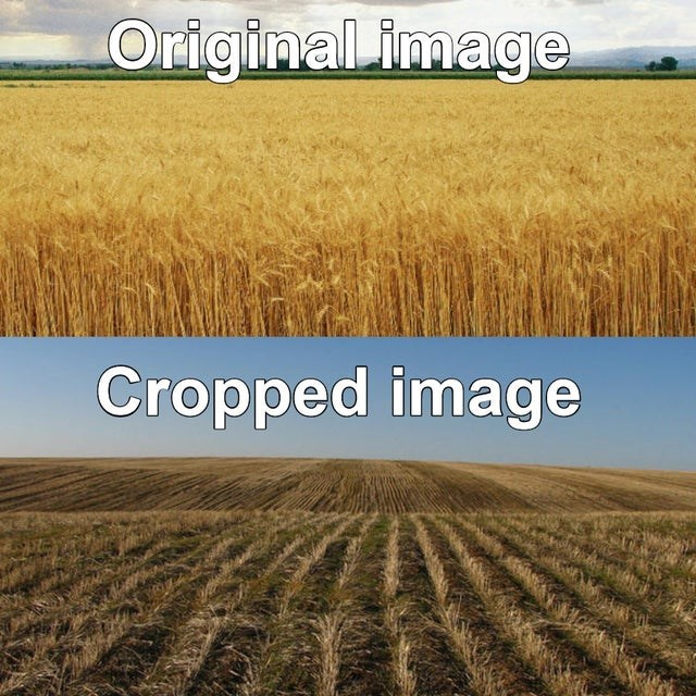 Bad dad joke meme about cropped images and original images, crops, wheat