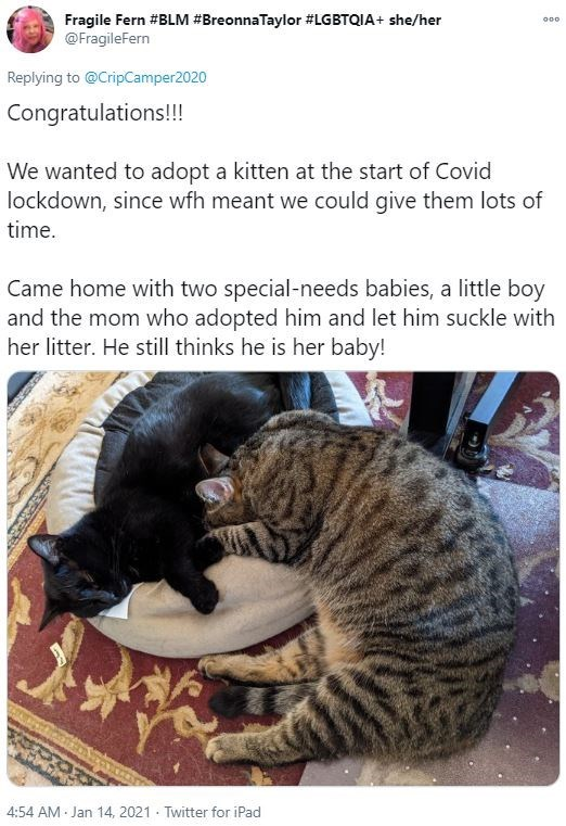 Vertebrate - Fragile Fern #BLM #BreonnaTaylor #LGBTQIA+ she/her @FragileFern Replying to @CripCamper2020 Congratulations!!! We wanted to adopt a kitten at the start of Covid lockdown, since wfh meant we could give them lots of time. Came home with two special-needs babies, a little boy and the mom who adopted him and let him suckle with her litter. He still thinks he is her baby! 4:54 AM Jan 14, 2021 · Twitter for iPad