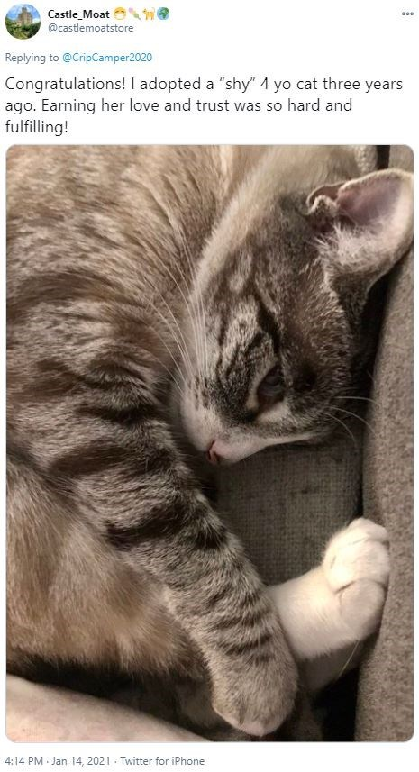 """Skin - Castle_Moat @castlemoatstore Replying to @CripCamper2020 Congratulations! I adopted a """"shy"""" 4 yo cat three years ago. Earning her love and trust was so hard and fulfilling! 4:14 PM Jan 14, 2021 - Twitter for iPhone"""