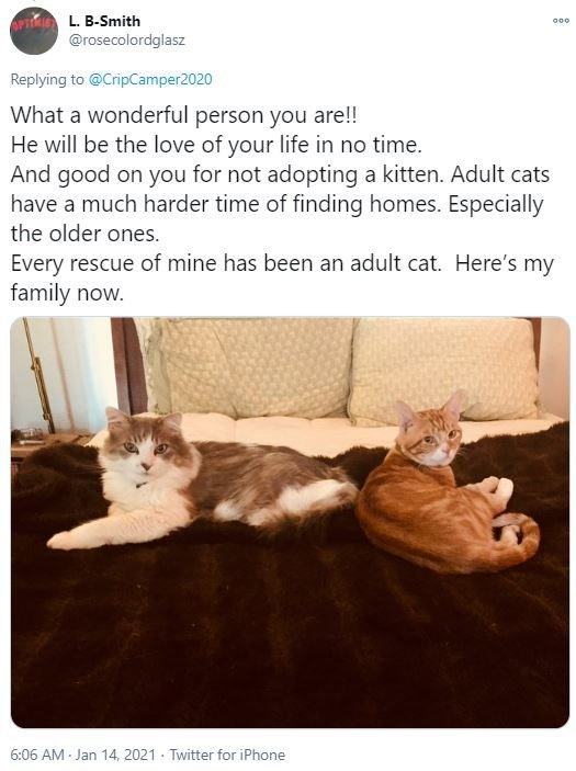 Organism - L. B-Smith @rosecolordglasz 000 Replying to @CripCamper2020 What a wonderful person you are!! He will be the love of your life in no time. And good on you for not adopting a kitten. Adult cats have a much harder time of finding homes. Especially the older ones. Every rescue of mine has been an adult cat. Here's my family now. 6:06 AM Jan 14, 2021 · Twitter for iPhone