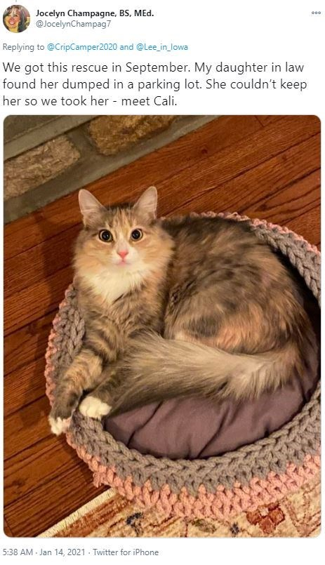 Wood - Jocelyn Champagne, BS, MEd. @JocelynChampag7 000 Replying to @CripCamper2020 and @Lee_in_ lowa We got this rescue in September. My daughter in law found her dumped in a parking lot. She couldn't keep her so we took her - meet Cali. 5:38 AM Jan 14, 2021 - Twitter for iPhone