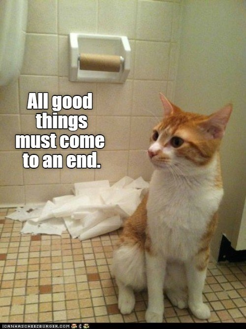 All good things must come to an end. | cat next to empty toilet paper roll