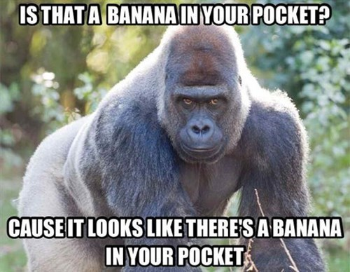 IS THAT A BANANA IN YOUR POCKET BECAUSE IT LOOKS LIKE THERE'S A BANANA IN YOUR POCKET ape gorilla