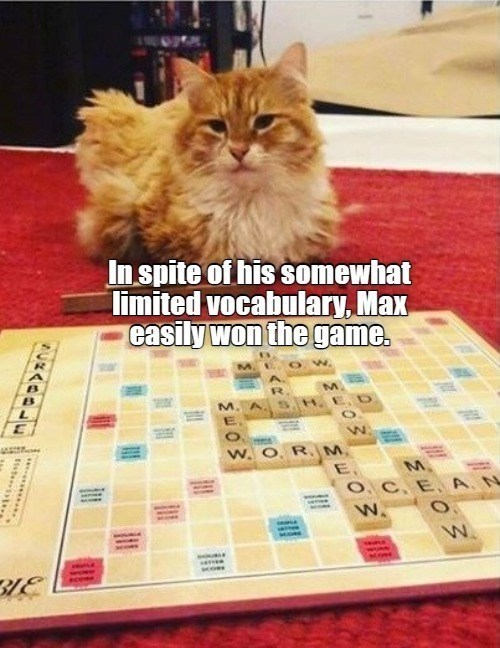 In-spite of his somewhat limited vocabulary, Max easily won-the game. | cat playing scrabble