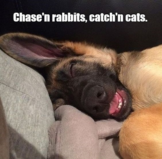 Chase'n rabbits, catch'n cats. | cute dog sleeping and dreaming