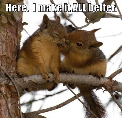Here. I make it ALL better | cute squirrel kissing another squirrel's face comfortingly