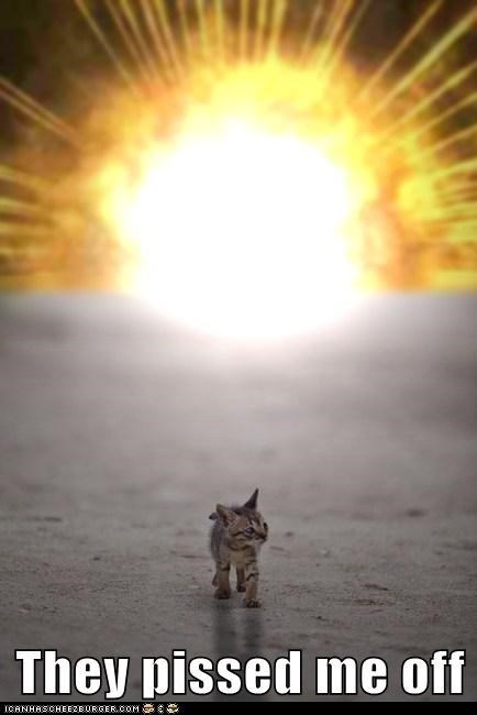 They pissed me off tiny kitten walking away from an explosion