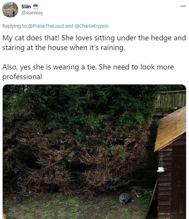 Adaptation - Siân 000 @sianieay Replying to @PraiseTheLoud and @Charlietrypsin My cat does that! She loves sitting under the hedge and staring at the house when it's raining. Also, yes she is wearing a tie. She need to look more professional