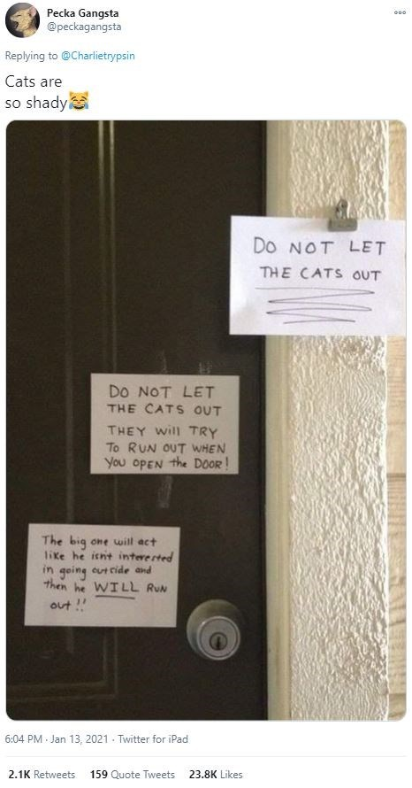 Text - Pecka Gangsta @peckagangsta Replying to @Charlietrypsin Cats are so shady DO NOT LET THE CATS OUT DO NOT LET THE CATS OUT THEY will TRY To RUN OUT WHEN You OPEN the DOOR ! The big one will act like he isnt intererted in going cut cide and then he WILL RUN out ! 6:04 PM Jan 13, 2021 - Twitter for iPad 2.1K Retweets 159 Quote Tweets 23.8K Likes