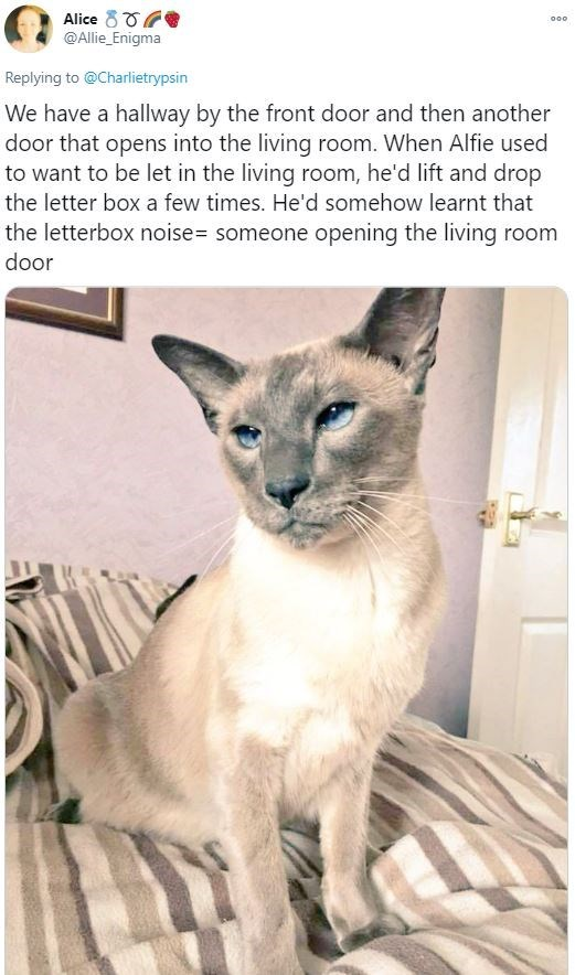 Organism - Alice 80G @Allie_Enigma 000 Replying to @Charlietrypsin We have a hallway by the front door and then another door that opens into the living room. When Alfie used to want to be let in the living room, he'd lift and drop the letter box a few times. He'd somehow learnt that the letterbox noise= someone opening the living room door