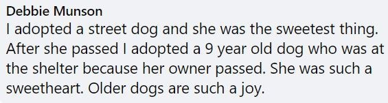 Text - Debbie Munson I adopted a street dog and she was the sweetest thing. After she passed I adopted a 9 year old dog who was at the shelter because her owner passed. She was such a sweetheart. Older dogs are such a joy.