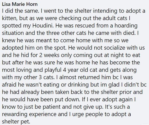 Text - Lisa Marie Horn I did the same. I went to the shelter intending to adopt a kitten, but as we were checking out the adult cats I spotted my Houdini. He was rescued from a hoarding situation and the three other cats he came with died. I knew he was meant to come home with me so we adopted him on the spot. He would not socialize with us and he hid for 2 weeks only coming out at night to eat but after he was sure he was home he has become the most loving and playful 4 year old cat and gets al