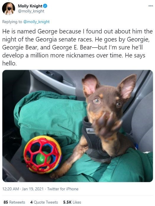 Dog breed - Molly Knight @molly_knight 000 Replying to @molly_knight He is named George because I found out about him the night of the Georgia senate races. He goes by Georgie, Georgie Bear, and George E. Bear-but I'm sure he'll develop a million more nicknames over time. He says hello. 12:20 AM Jan 19, 2021 · Twitter for iPhone 85 Retweets 4 Quote Tweets 5.5K Likes