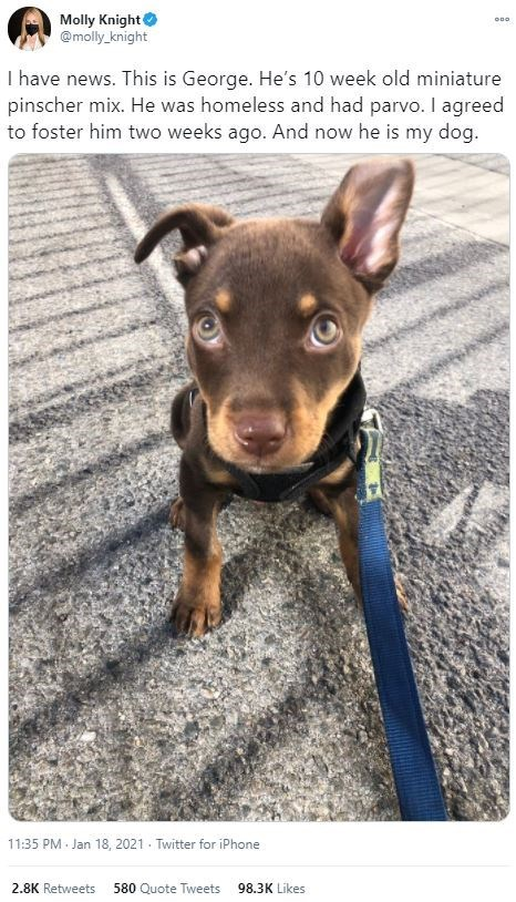 Dog breed - Molly Knight @molly knight I have news. This is George. He's 10 week old miniature pinscher mix. He was homeless and had parvo. I agreed to foster him two weeks ago. And now he is my dog. 11:35 PM Jan 18, 2021 - Twitter for iPhone 2.8K Retweets 580 Quote Tweets 98.3K Likes