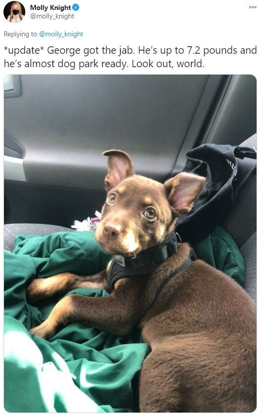 Dog breed - Molly Knight @molly_knight 000 Replying to @molly _knight *update* George got the jab. He's up to 7.2 pounds and he's almost dog park ready. Look out, world.