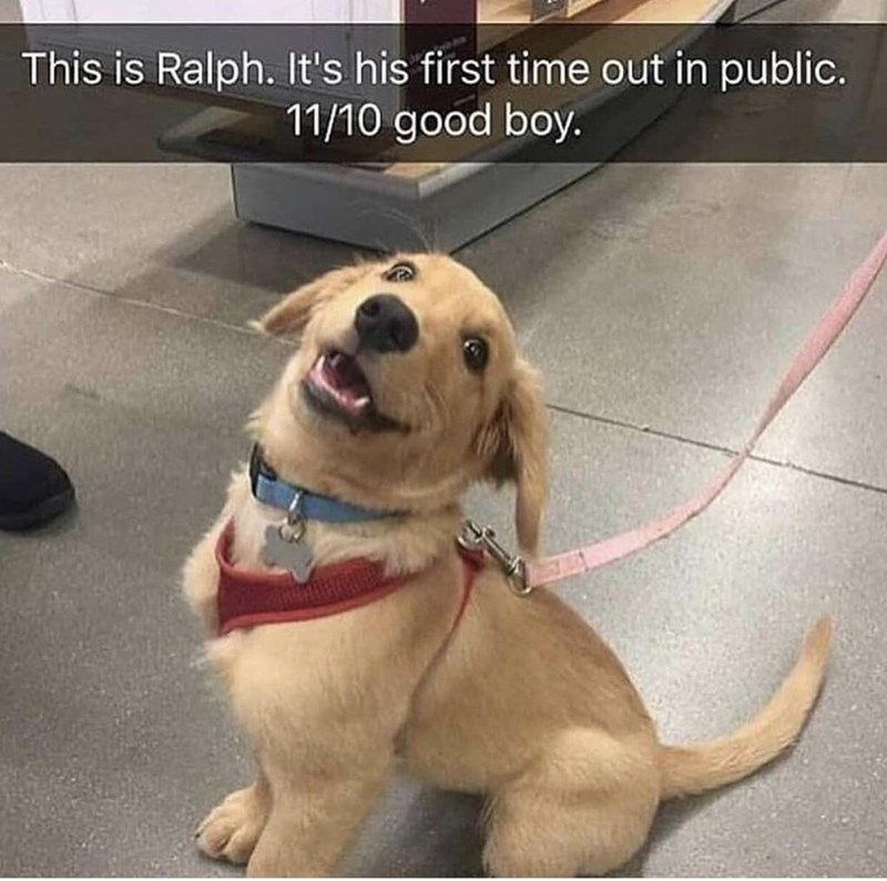 Dog breed - This is Ralph. It's his first time out in public. 11/10 good boy.