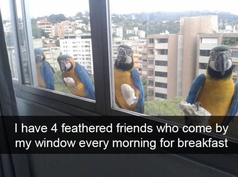Bird - I have 4 feathered friends who come by my window every morning for breakfast