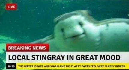 Yellow - LIVE BREAKING NEWS LOCAL STINGRAY IN GREAT MOOD 18:30 THE WATER IS NICE AND WARM AND HIS FLAPPY PARTS FEEL VERY FLAPPY INDEED